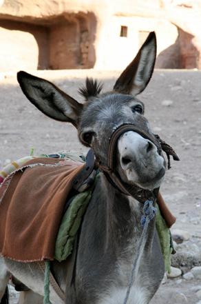 ¿Clientes o burros amarrados?